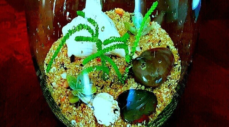 Crassula muscosa watch chain as coral in terrarium - The Hypertufa Gardener