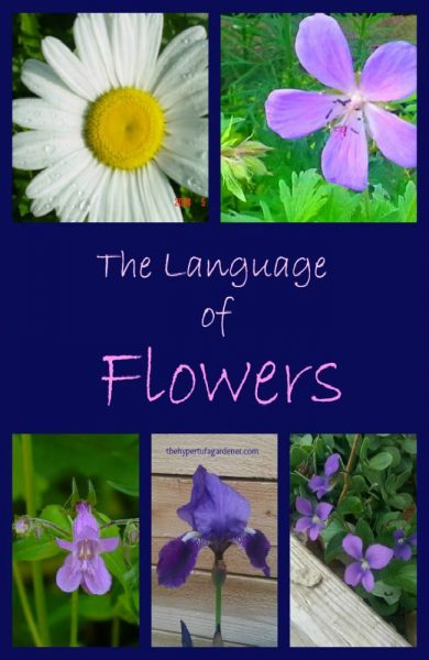 Flower Meanings - The Hypertufa Gardener Post
