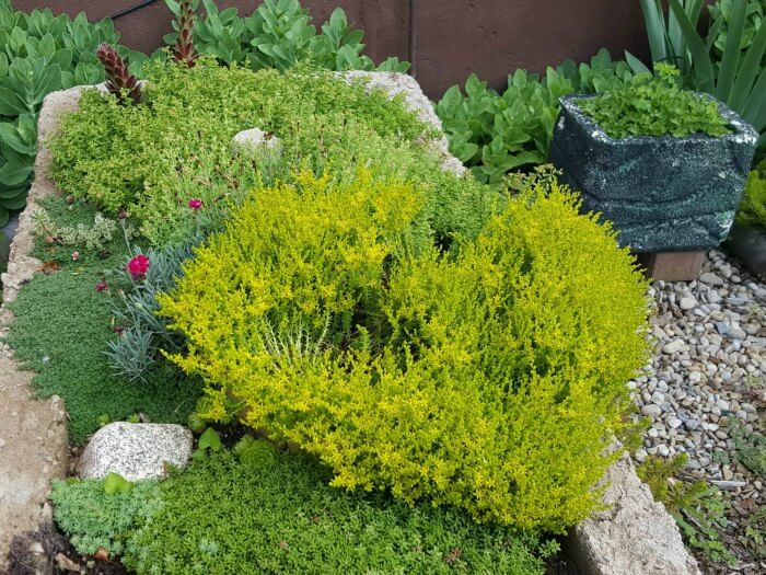 Growing Plants in the Large Hypertufa - The Hypertufa Gardener