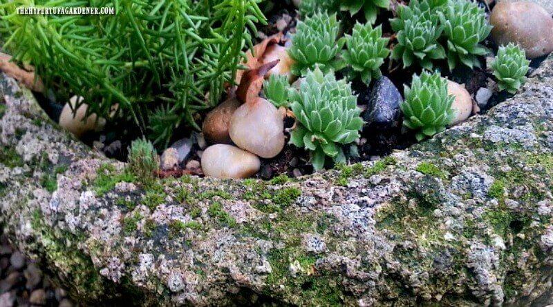 How To Grow Moss On Your Hypertufa Pots The Hypertufa Gardener