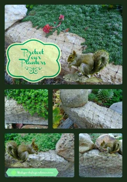 Keeping Squirrels Out of Garden Planters Use Netting - The Hypertufa Gardener