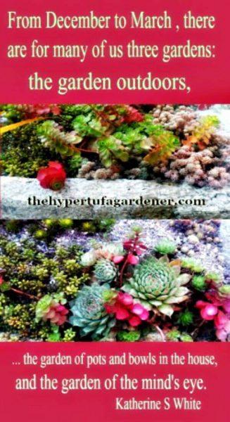Loving My Miniature Plants from The Hypertufa Gardener