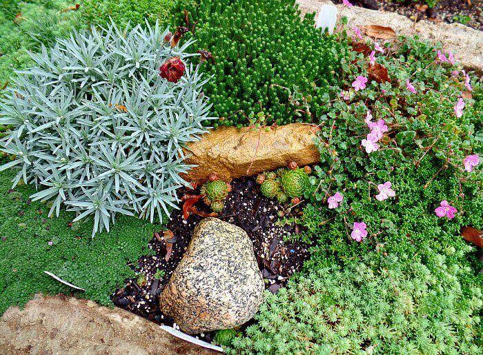 Loving My Miniature Plants in Hypertufa
