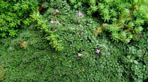 Loving My Miniature Plants