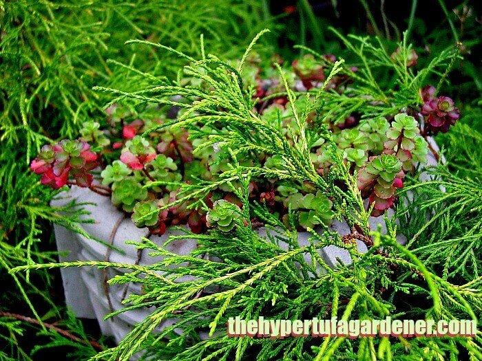 Stone planter among shrubbery - The hypertufa gardener