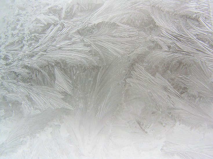 frosted window like ferns