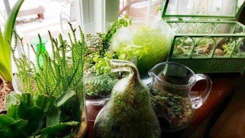 image of my indoor garden glowing in bright sun