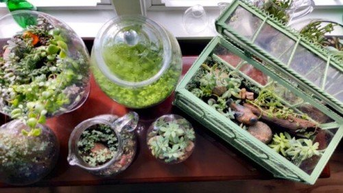 image of Grouping of indoor garden containers