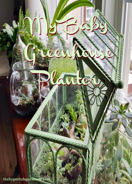indoor succulent garden greenhouse