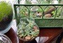 My Little Indoor Succulent Garden – It's Terrariums!