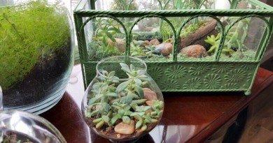 My Little Baby Indoor Succulent Garden - It's A Greenhouse!(1)(1)