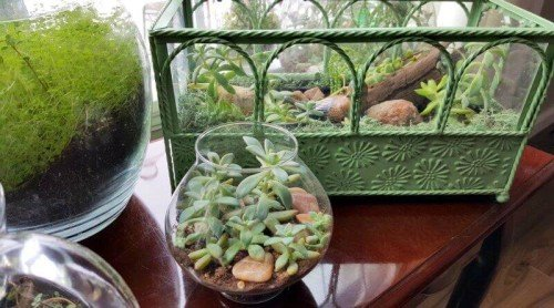 My Little Indoor Succulent Garden – It's Terrariums!