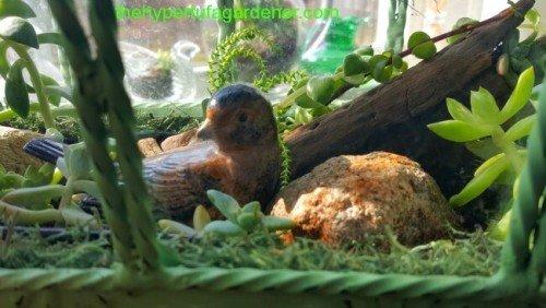 image of My little indoor succulent garden bird