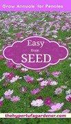 Reseeding Annuals-the-hypertufa-gardener