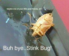 Stink bug demise