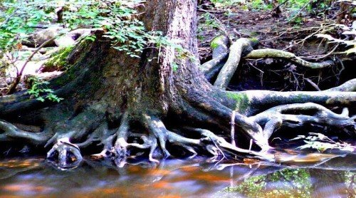 Trees – A Look Into the Heart and Soul of Nature