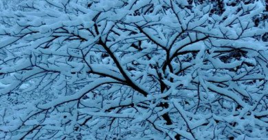 Cold and Snowy – When is Spring?