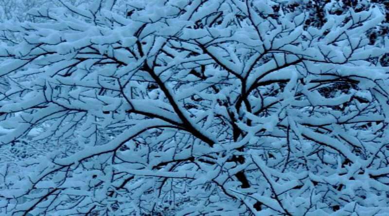 snow-when-spring-hypertufa-gardener
