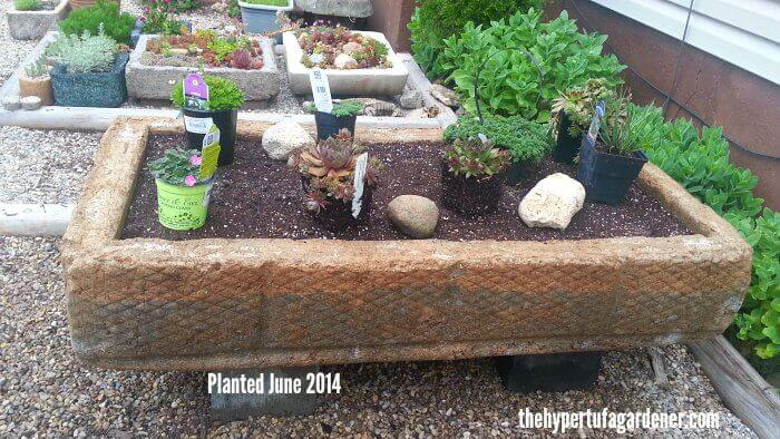 Big Hypertufa Planted June, Made in May