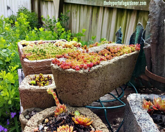 Hypertufa pots with Sedum coral carpet