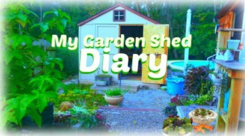 My Garden Shed Diary