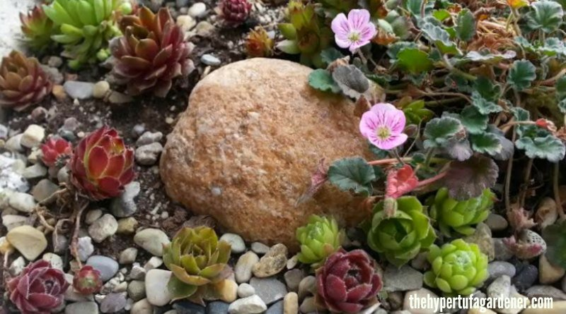 Choosing Plants for Hypertufa Planters