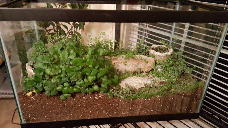 Erodium wintered in aquarium as terrarium