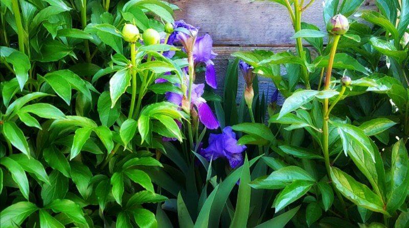 Flower Garden Ideas in Spring