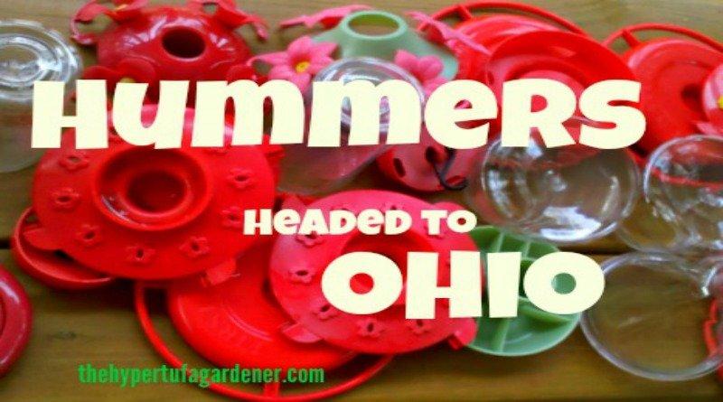 Hummers Ohio- The Hypertufa Gardener