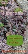 Sedum-hispanicum-hypertufa-gardener(1)