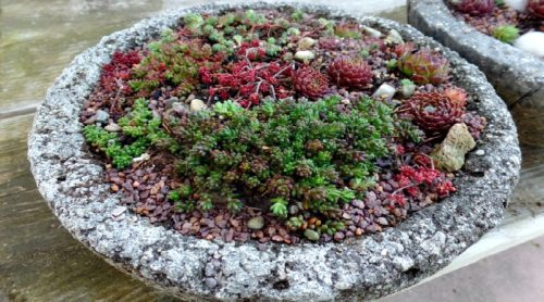 All Dried Up? or Plump & Perky? – Succulent Care 101