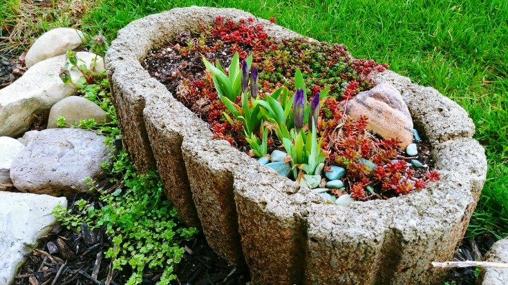 The Hypertufa Gardener - Iris bloom in spring in a hypertufa pot