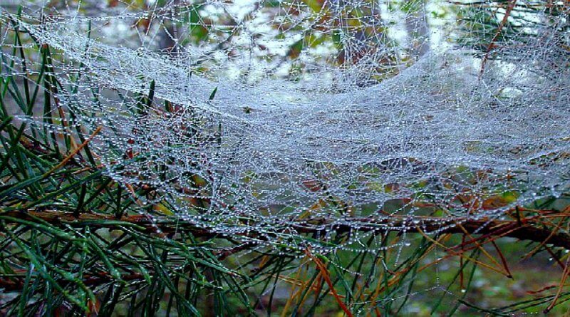 fairy tents or spider webs with dew