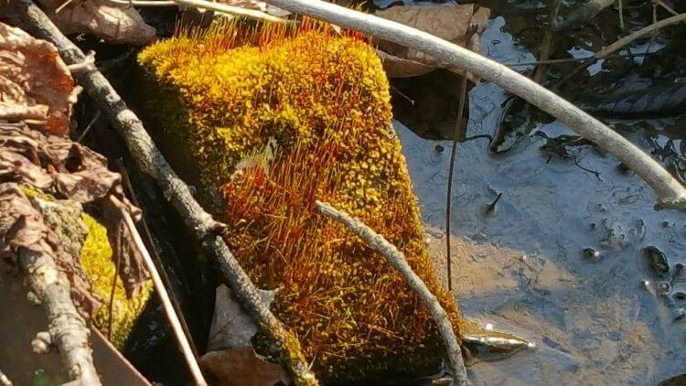 very orange moss