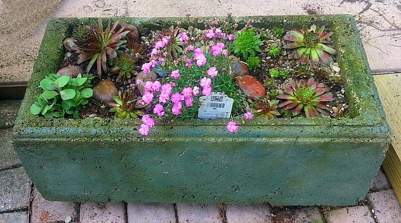 Ant Wars –  Ant Infestation In My Hypertufa Trough