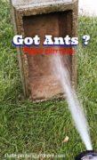 Ant infestation Got Ants
