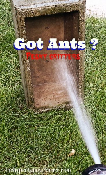 Ant infestation Got Ants