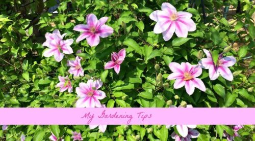 My Gardening Tips