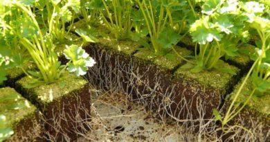 Getting Garden Planter Soil Right(1)(1)
