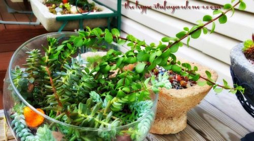 Growing Succulents In Terrariums -Time To Go Outside!