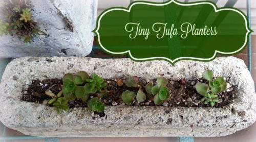 Little Hypertufa Planters ! So Cute!