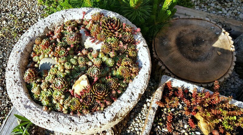Why Would You Want to Make a Hypertufa Planter