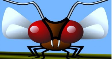 illustration of gnat