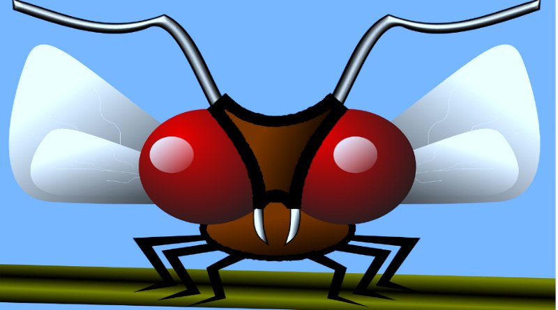 Five Indoor Insects Fighters – Worked For Some Gnats!