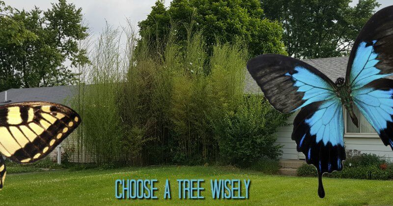 Gardeners Code Choose a tree wisely