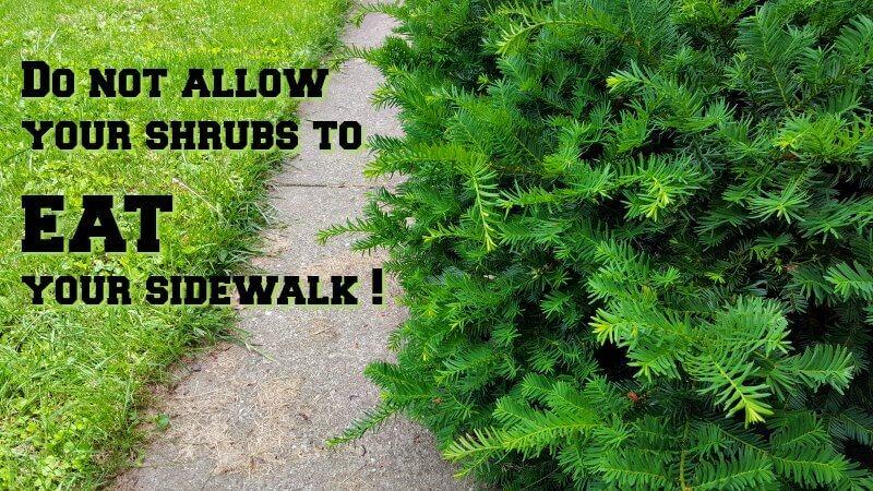 Gardeners Code - Shrubs Eat Sidewalk