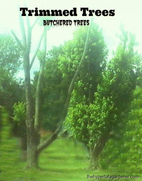 Gardeners Code - Trimmed Trees