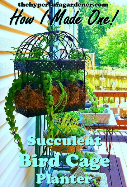 image of Hanging Bird Cage Planter