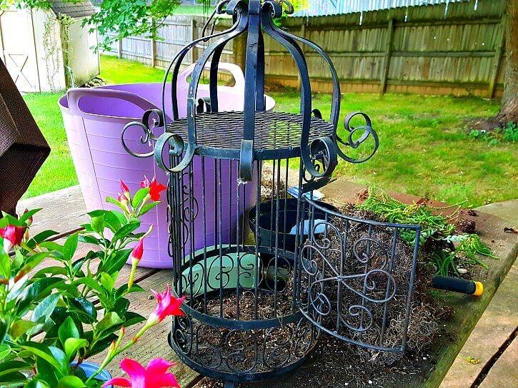 Large cage for dipladenia mandevilla