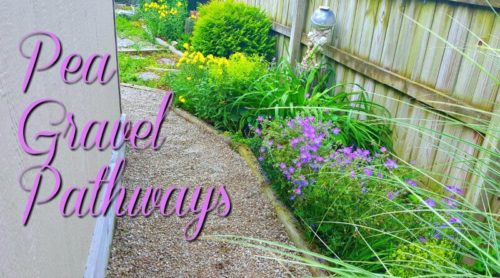 Rewind:  Pea Gravel Pathways – Oh Our Aching Backs!